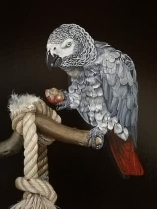 Peinture Perroquet Beau parleur